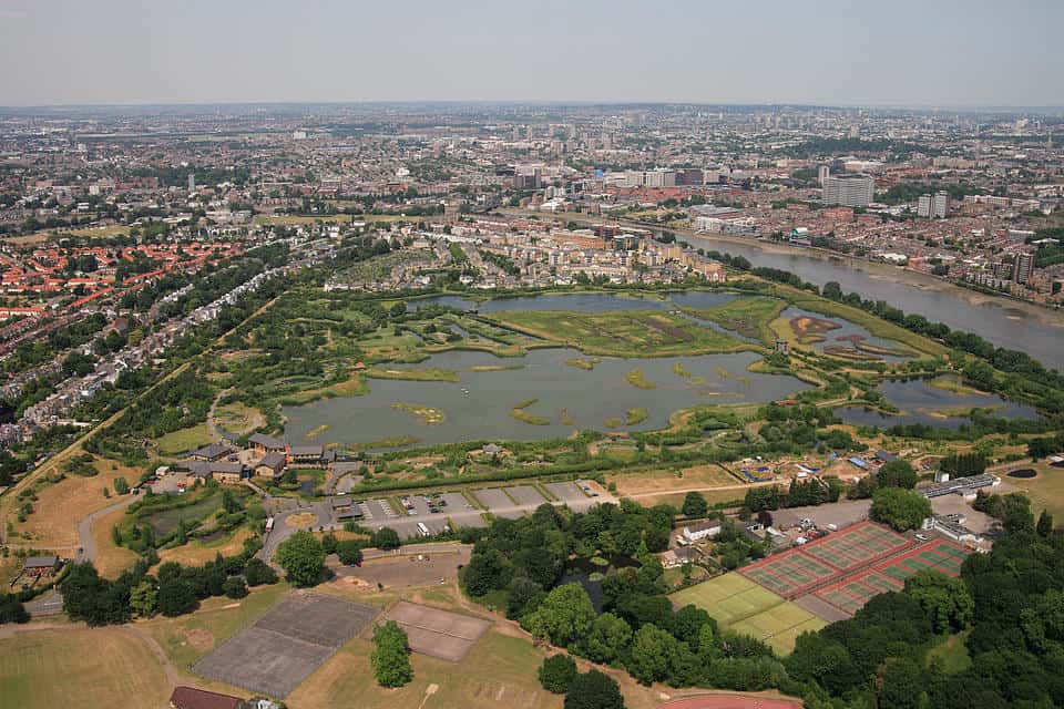 barnes wetlands london
